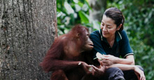 Among the Great Apes with Michelle Yeoh, National Geographic